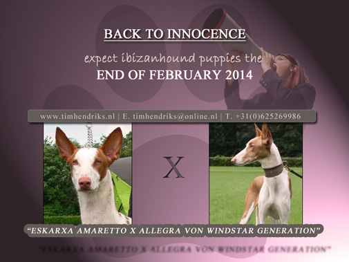 Podenco puppys expected
